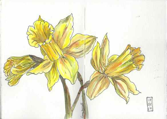 140217 Daffodils