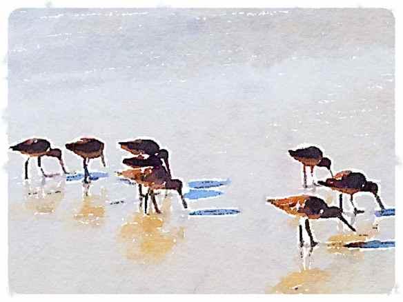 Waterlogue - Illustration
