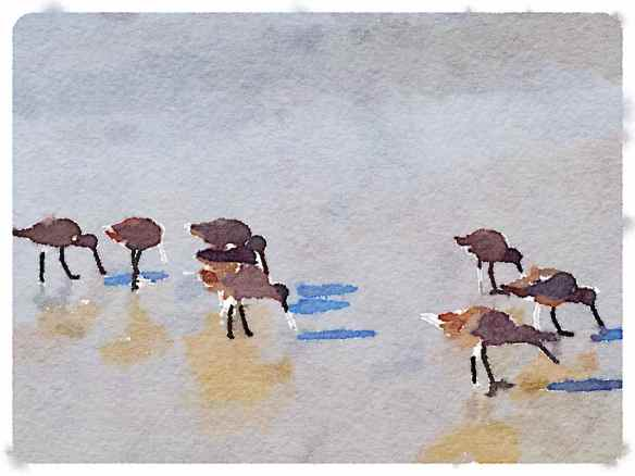 Waterlogue - Shallow