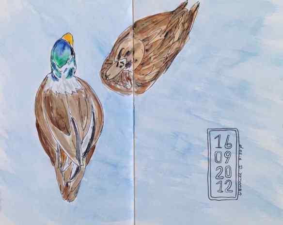 D-ducks1