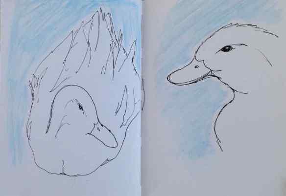 D-ducks2